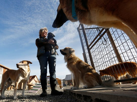 In this Nov. 29, 2017 photo, Debbie Faulkner is surrounded by rescue dogs at her ranch in Crawford, Colo. Faulkner is the owner of the Black Canyon Animal Sanctuary and founder of the Silver Whiskers program where senior pets are paired with senior citizens.