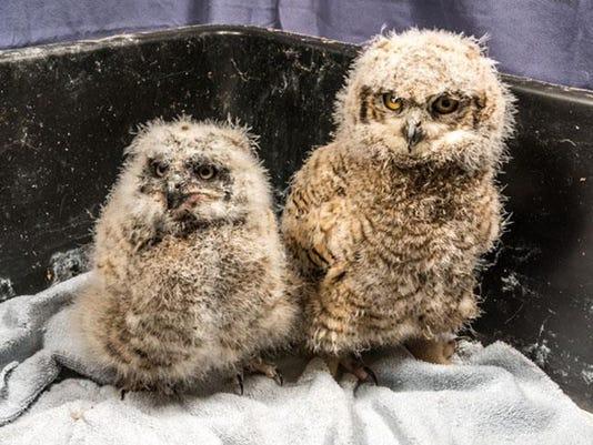 owls 01.jpg