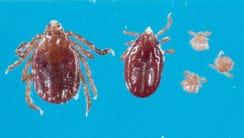 The Longhorned tick has not been known to exist in