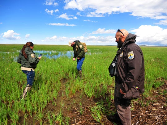 Montana Fish Wildlife and Parks game wardens, Kqyn Kuka, left, and Trenten Farmer, center, and federal wildlife officer Clay Ronish find a grizzly bear track at Benton Lake Wildlife Refuge on Thursday morning.