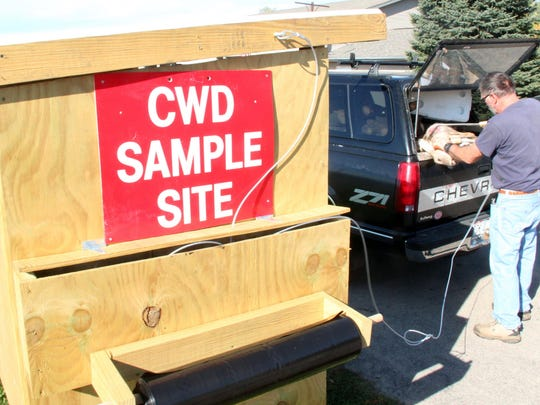 Charles Pickhardt of Madison prepares a deer for chronic wasting disease testing at a CWD sampling kiosk in Spring Green.