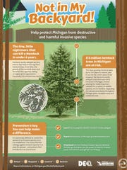 Here's what you can do to protect Michigan from hemlock