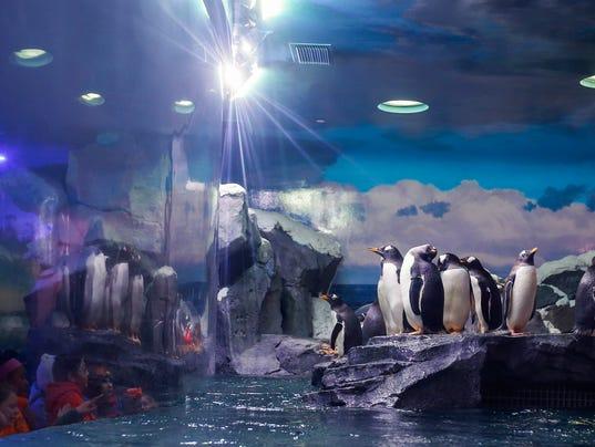 636489385444884031-penguins5.jpg
