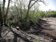 Appleton removes high-risk trees at Jones Park