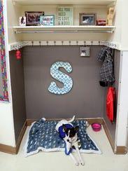 Service dog Skittles accompanites her human, Taylor