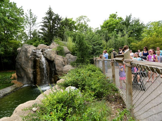 Visitors to the Cincinnati Zoo & Botanical Garden look for the cheetahs lounging in the back of the exhibit.