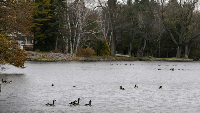 Geese rest in Columbia Pond, an impoundment of Cedar Creek, downstream of Adlai Horn Park in Cedarburg, in 2015.