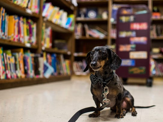 Charlie, the library dog at L. Leo Judice Elementary