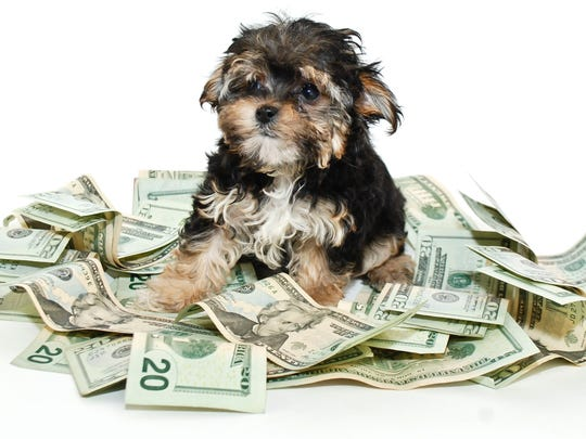 Smaller dogs cost less to keep.
