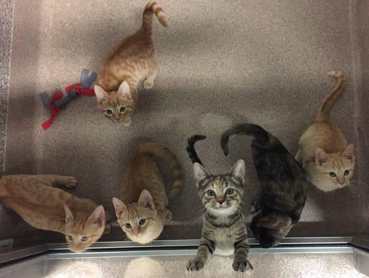 636145776984931750-kittens2016.JPG