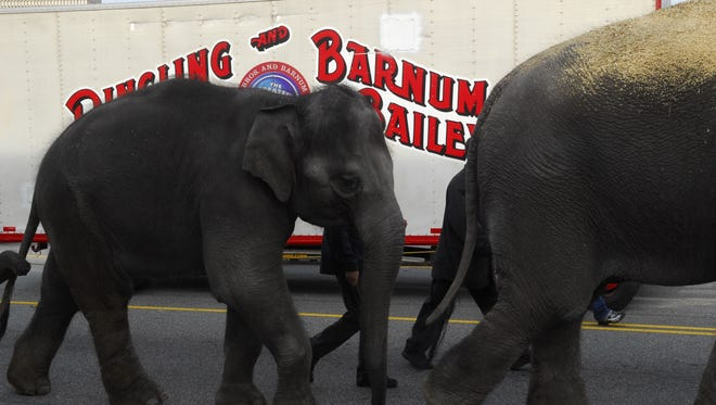 There will not be an animal walk through downtown Greenville this week to accompany the circus coming to town.