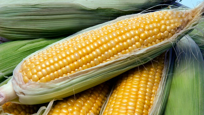 A resident from Westerly, R.I., shot corncobs at his neighbor using a PVC potato gun.