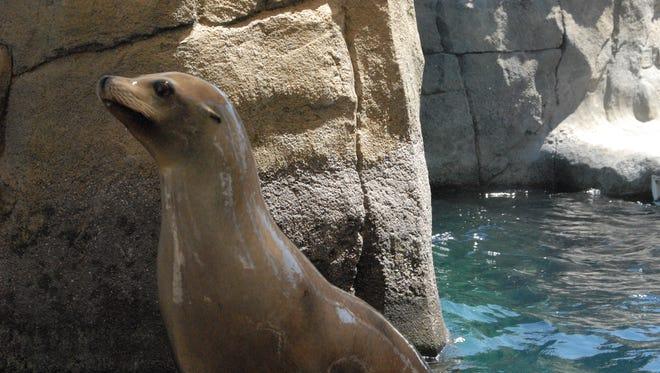 Sushi, El Paso Zoo's female sea lion, died Wednesday.