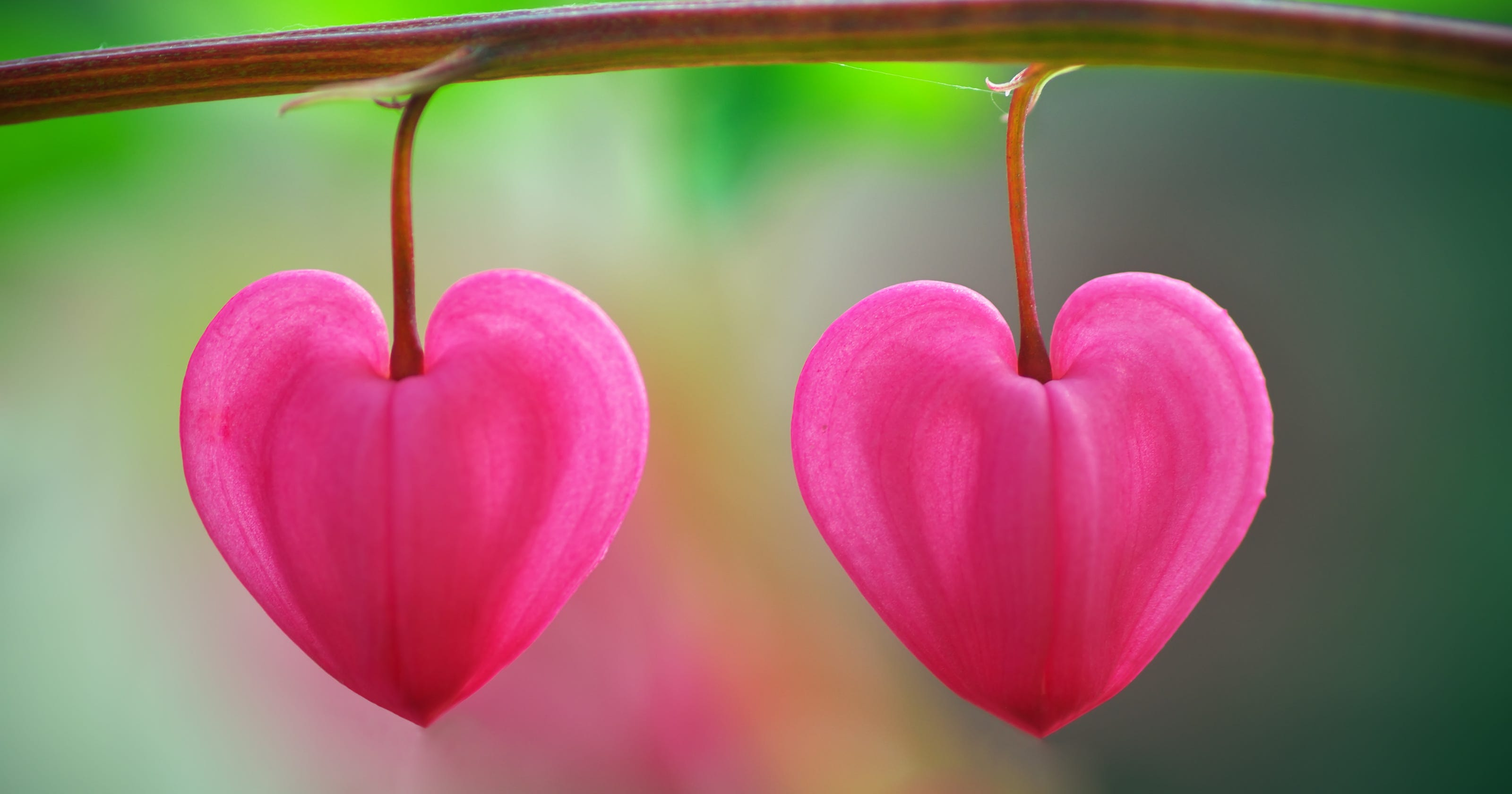 This Valentine S Day Think Heart Shaped Plants Leaves
