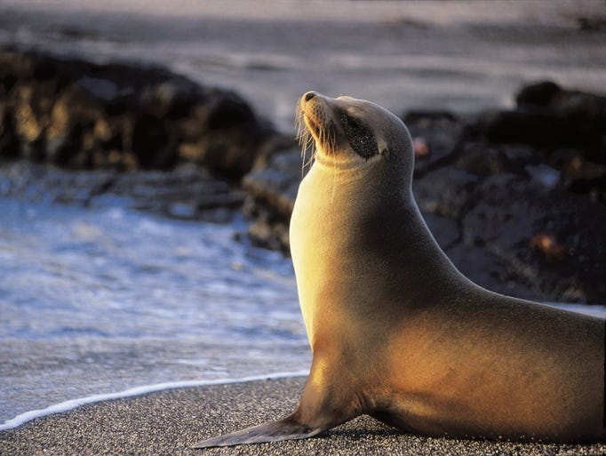Ecuador's Galapagos Islands played a central role in Charles Darwin's theory of evolution, and is still one of the world's top places to see wildlife.
