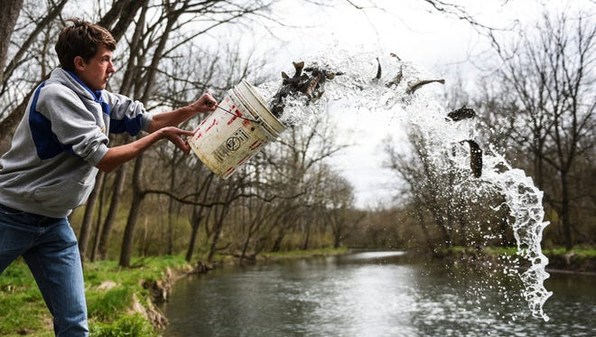 Northern Lebanon High School senior Kyle Moore, 17, throws trout into the Quittapahilla Creek in North Annville Township on Thursday, March 31, 2016. Moore and 17 other students from Northern Lebanon High School, helped the Pennsylvania Fish and Boat Commission stock the creek before Saturday's opening day of trout season. The Quittapahilla was the last waterway to be stocked, according to Wildlife Conservation Officer Douglas Deppen. The Fish and Boat Commission is responsible for stocking the Quittapahilla Creek, Conewago Creek, Bachman Run, Snitz Creek, Tulpehocken Creek, Middle Creek, Indiantown Run, Trout Run Marquette Lake, Lions Lake and Stoever's Dam in Lebanon County, Deppen said. The Quittapahilla is the busiest creek for fishing, besides the three lakes, Deppen said.