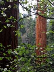 BLM sequoia 2