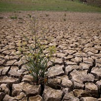 Weeds grow in dry, cracked earth that used to be the bottom of Lake McClure on March 24 in La Grange, Calif. More than 3,000 residents in the Sierra Nevada foothill community of Lake Don Pedro who rely on water from Lake McCLure could run out of water in the near future if the severe drought continues.