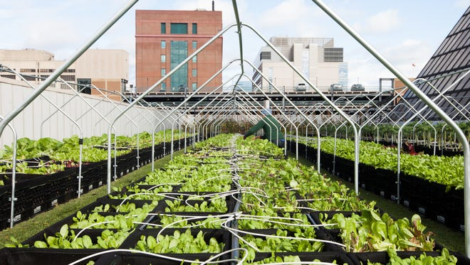 The 7,000-square foot rooftop farm at Boston Medical Center.