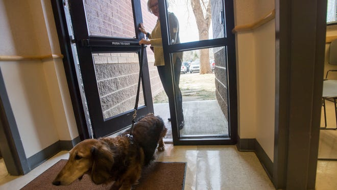 12-year old dachshund Tootle and his owner Eva Knight enter a side door for Tootle's treatment session on Thursday, March 15, 2018, at Colorado State University's Veterinary Diagnostic Laboratory in Fort Collins, Colo.