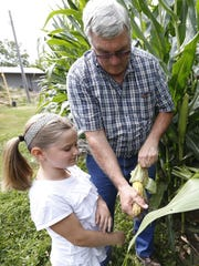 Bob Bowman shucks corn so he and granddaughter Ella, 7, can count the rows of kernels Friday at his farm near DeWitt. He is optimistic strong yields will help offset low prices this year.