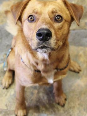 Pet of the Day: Rupert
