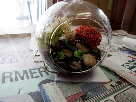 Terrarium with hens and chicks.