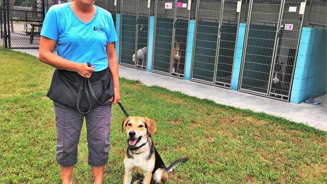 Aiken County Animal Shelter dog trainer Karen DeCamp, seen here with adoptable dog Miles, says preparation and patience are keys to a successful adoption.