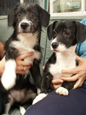 Paris and Piper and looking for a good home.