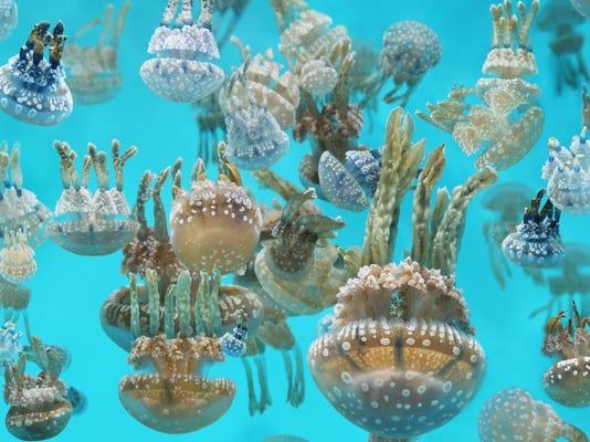 AquariumJellies.jpg