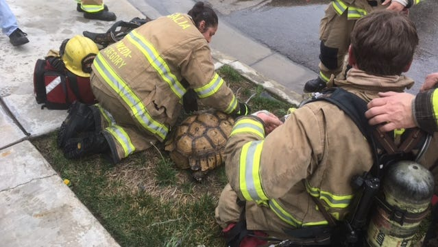 Firefighters treat a tortoise for smoke inhalation after finding it in a burning garage.
