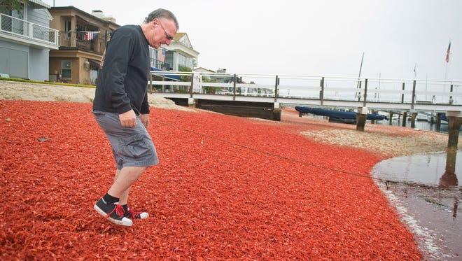 Gregg Adler steps gingerly through a blanket of crustaceans on Balboa Island in Newport Beach, Calif., on June 16, 2015.