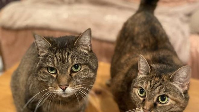 The Taunton Shelter Pets of the Week are Prissy and Missy.