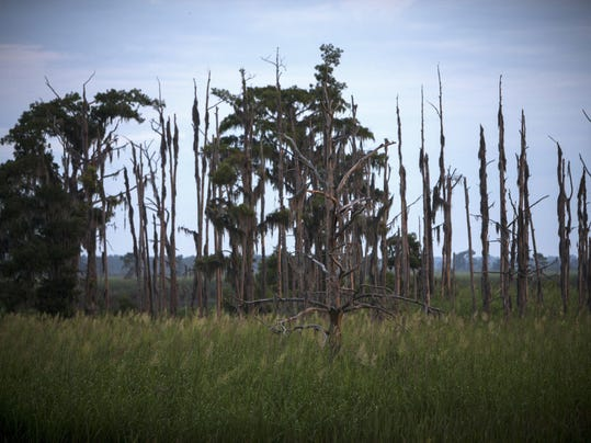 Sea Level Rise Ghost Forests