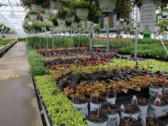 Perennials you purchase in the greenhouse will be sensitive to spring frosts.jpg