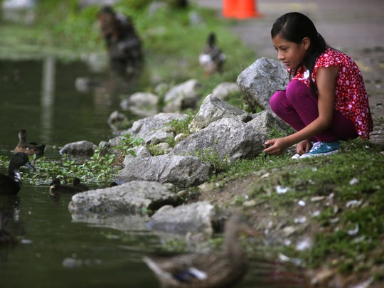 Yury Escalante, 8, stops to check out the ducks during a family walk through Sharon Woods. The Escalantes like spending time together at nearby parks, especially since the children were not allowed to go outside when they were staying with an abusive uncle in Guatemala.