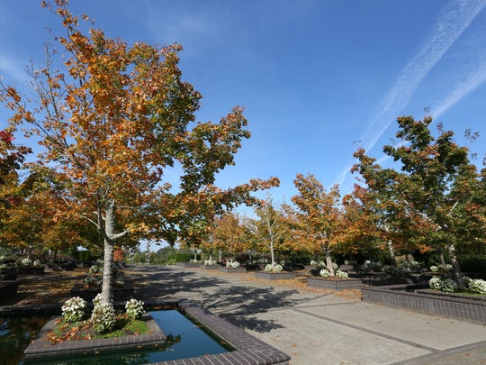 The Oregon Garden is dressed in fall color in October. The 80-acre botanical garden, features more than 20 specialty gardens.
