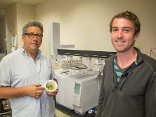 Jim Simon, a professor of new‐use agriculture at Rutgers, and Robert Pyne, a doctoral candidate in plant biology, prepare to analyze the chemical and aromatic contents of female hops cones.