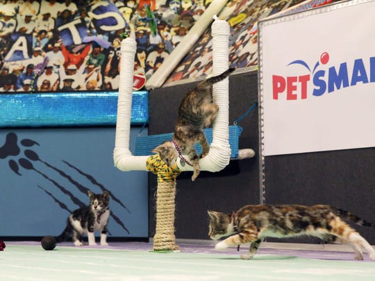 Kittens are photographed in October during a taping of Kitten Bowl III. The Hallmark Channel taped Kitten Bowl III months ahead of Super Bowl Sunday, taking place on Feb. 7.