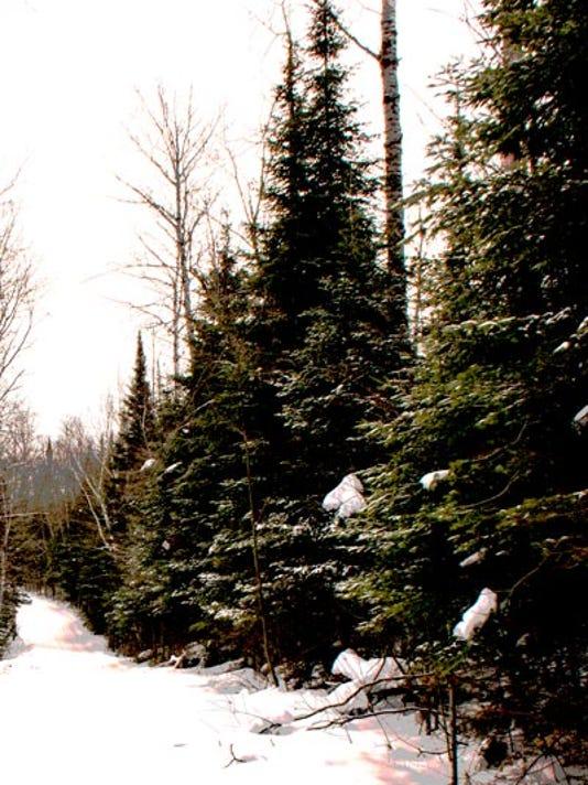 635846707070063624-Christmas-tree.jpg