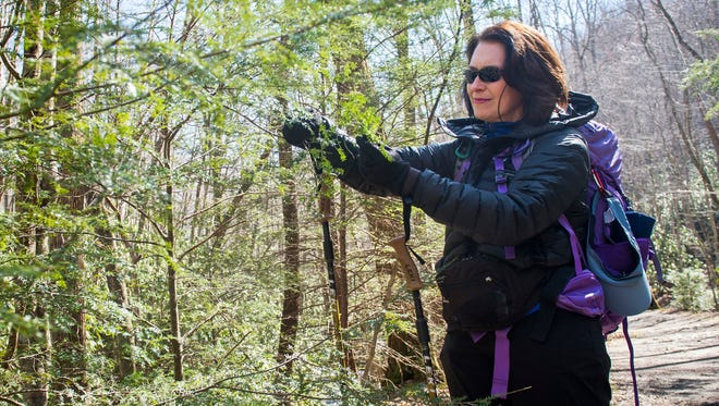 Kathy Zachry looks at a hemlock tree while hiking along the Middle Prong Trail in the Great Smoky Mountains National Park on Thursday, March 2, 2017. Kathy and her husband Joel Zachry are two of the heads of the Smoky Mountain Field School.