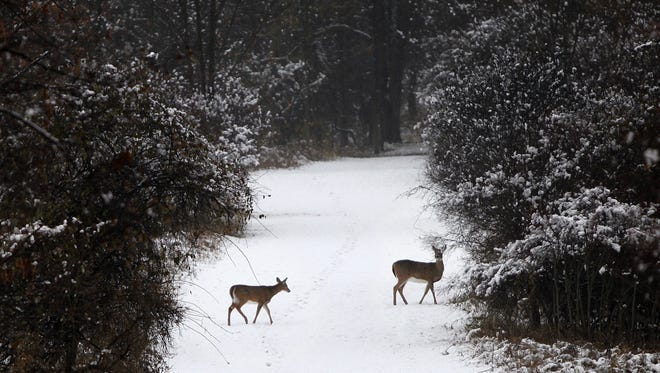 Two deer roam a path in the woods at Mendon Ponds Park during the first snowfall of the season in November 2014.