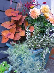 Assorted Fall Foliage