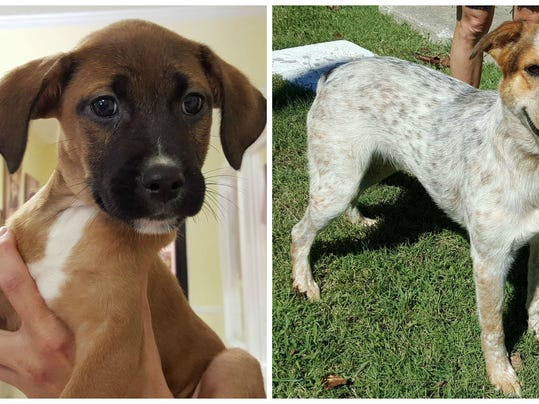 Humane Society Of Sumner County Pets Of The Week