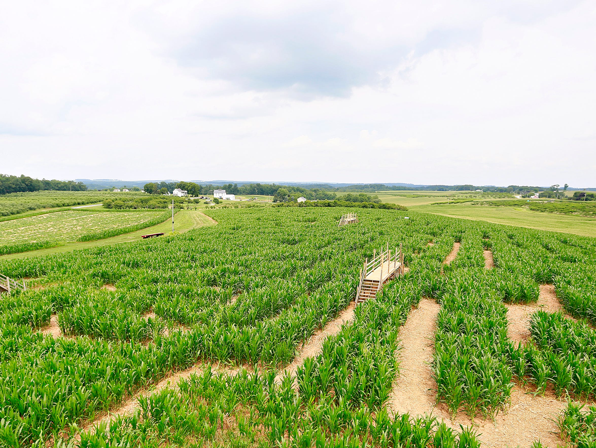 The corn maze attraction is seen from the tower at