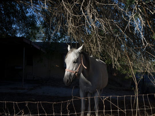 A horse grazes in the front yard of an abandoned home