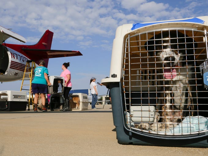 A dog displaced after recent floods waits in a carrier