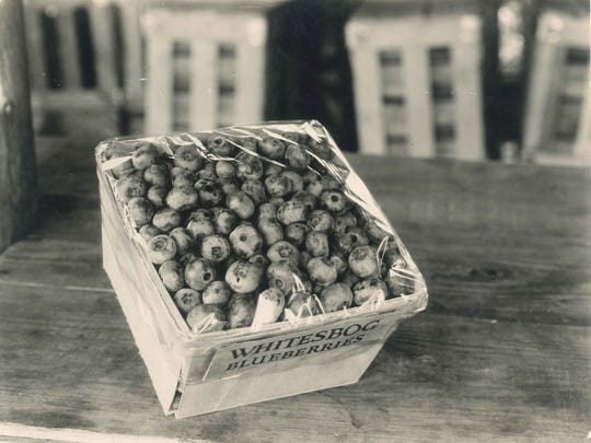 An early container of Whitesbog blueberries with cellophane packaging. The Whites cared deeply about marketing and Elizabeth White was the first to use cellophane to package produce.