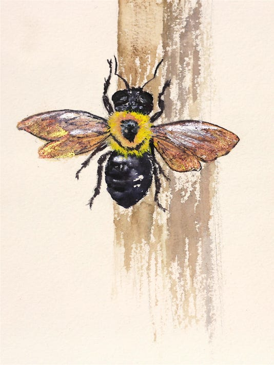 carpenter-bee.jpg