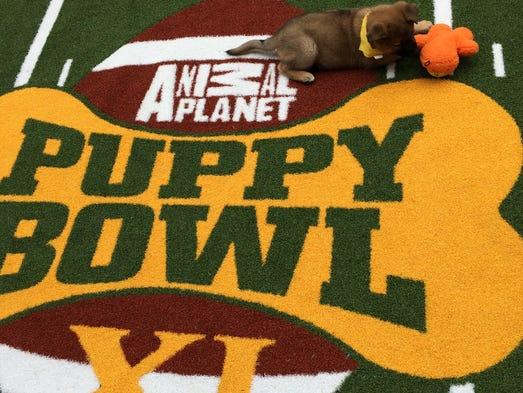 Trip, a German sherpherd mix, sat on the Puppy Bowl